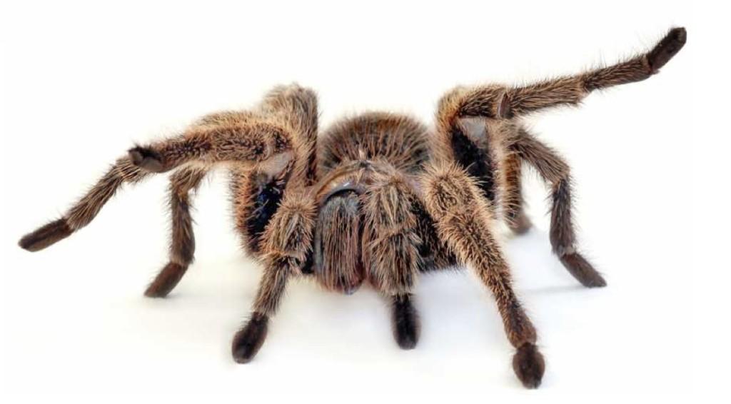 © Welt der Spinnen