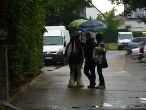 auch ein Pferd möchte vorm Regen geschützt sein