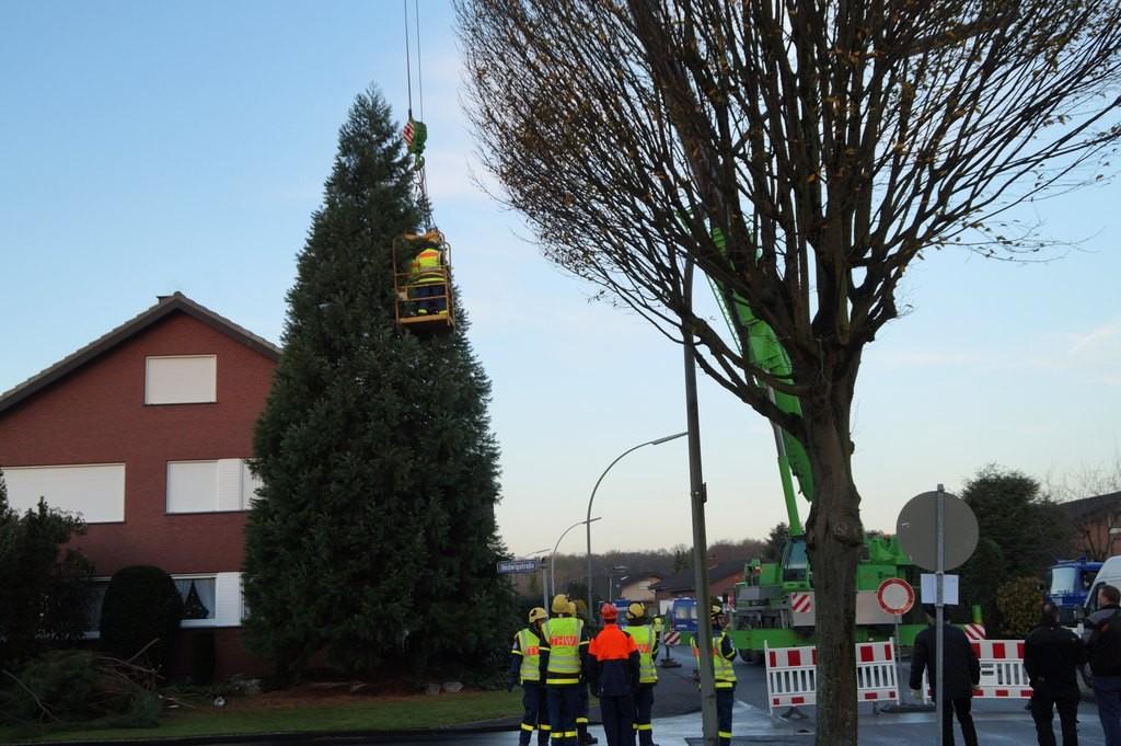 Die Kette wird am Baum befestigt